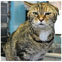 Adopt A Pet :: Pocohantis - Forked River, NJ