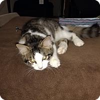 Adopt A Pet :: Daisy - Ortonville, MI