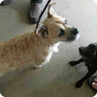 Adopt A Pet :: BALTO - Tulsa, OK