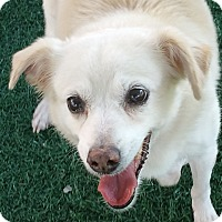 Adopt A Pet :: Shiro - Chula Vista, CA