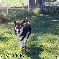 Adopt A Pet :: Thunder - Texarkana, AR