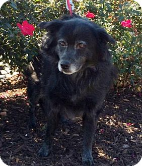 Border Collie Mix Dog for adoption in Kennesaw, Georgia - Babycakes