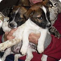 Adopt A Pet :: Rooney - Mt. Laurel, NJ