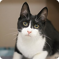 Adopt A Pet :: Archer - East Hartford, CT