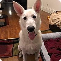 Adopt A Pet :: Kaiser - Rockford, IL