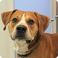 Adopt A Pet :: Zeke - Martinsville, IN