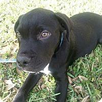 Adopt A Pet :: Roosevelt - Royal Palm Beach, FL