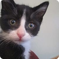 Adopt A Pet :: Nashville - Muskegon, MI