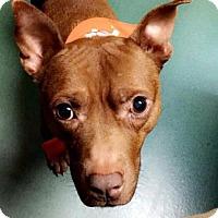Terrier (Unknown Type, Medium) Mix Dog for adoption in Richmond, Virginia - Alabama