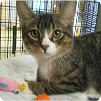 Adopt A Pet :: Mark - Deerfield Beach, FL