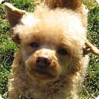 Adopt A Pet :: Otis - Dover, MA