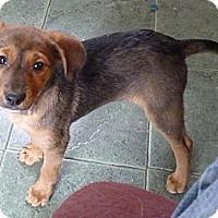 Adopt A Pet :: TIA - Paron, AR