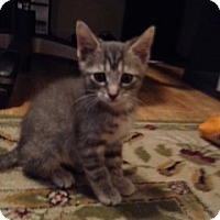 Adopt A Pet :: Eli - Monroe, GA