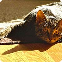 Adopt A Pet :: Lev - Orange, CA