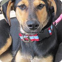 Adopt A Pet :: Summer - San Ysidro, CA