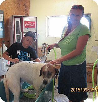 Basset Hound Mix Dog for adoption in Walthill, Nebraska - Page