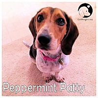 Adopt A Pet :: Peppermint Paay - Pittsburgh, PA