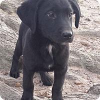 Adopt A Pet :: Mugs AD 02-13-16 - Preston, CT