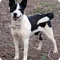 Adopt A Pet :: Riley - Westminster, CO
