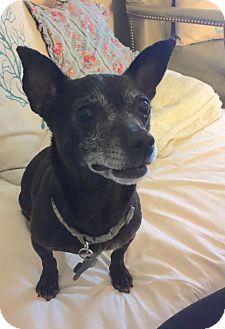 Chihuahua Mix Dog for adoption in Boise, Idaho - Moxie