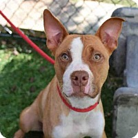 Adopt A Pet :: LYRIC - Atlanta, GA