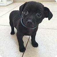 Adopt A Pet :: Doc - Lima, PA