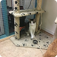 Adopt A Pet :: Oh No! - DeRidder, LA