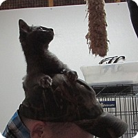 Adopt A Pet :: Hayes - Jackson, MO