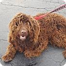 Adopt A Pet :: Walter