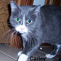 Adopt A Pet :: Carley - Oklahoma City, OK