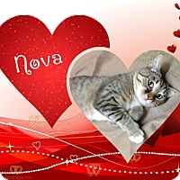 Adopt A Pet :: Nova - Buffalo, IN