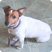 Adopt A Pet :: EDDIE - Dowagiac, MI