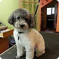 Adopt A Pet :: Zoe (DC) - Brattleboro, VT