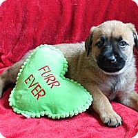 Adopt A Pet :: ARTEMIS - Loxahatchee, FL