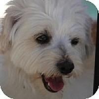 Adopt A Pet :: Emily - La Costa, CA