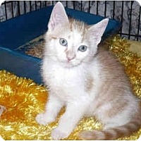 Adopt A Pet :: Trapper - Colmar, PA