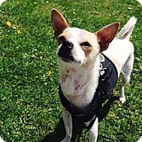 Adopt A Pet :: Rico - Vancouver, BC