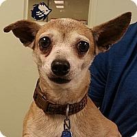 Adopt A Pet :: Caroline - Orlando, FL