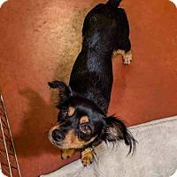 Adopt A Pet :: Saunders - Phoenix, AZ