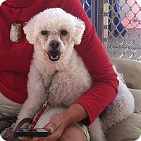 Adopt A Pet :: Rocky - La Quinta, CA