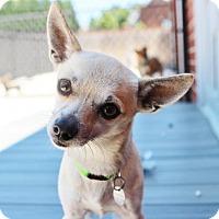 Adopt A Pet :: Willy - Smyrna, GA