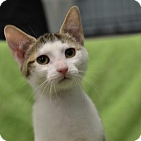 Adopt A Pet :: Snickers151094 - Atlanta, GA