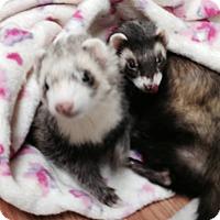 Adopt A Pet :: Juliet - Fawn Grove, PA