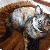 Adopt A Pet :: Peaches - McConnells, SC
