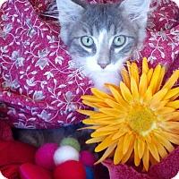 Adopt A Pet :: Farley - Scottsdale, AZ