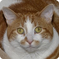 Adopt A Pet :: Mufasa - Medina, OH