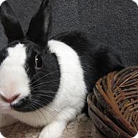 Adopt A Pet :: Tux - Newport, DE
