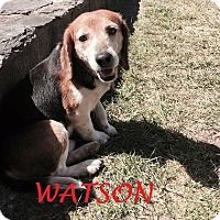 Adopt A Pet :: WATSON - Ventnor City, NJ