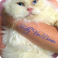 Adopt A Pet :: Kitty Von Baron - Island Park, NY
