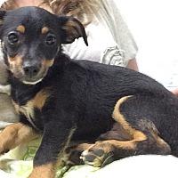 Adopt A Pet :: Sampson - Jasper, TN